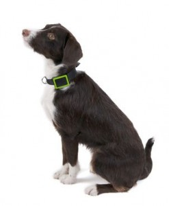 Collier GPS pour chien Weenect - Weenect - tracker