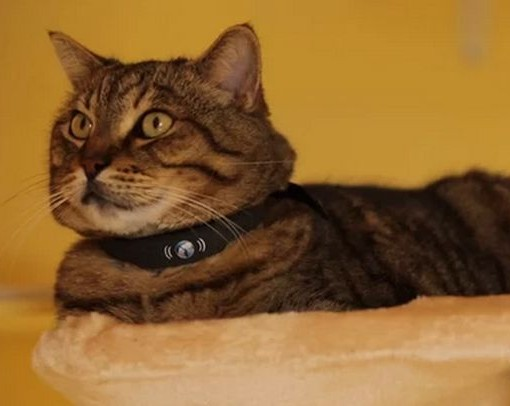 Collier connecté pour chat Petracer - PetTracer - tracker